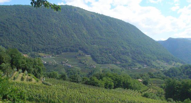 vino-tarcento